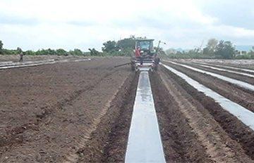 the establishment of paulownia plantations
