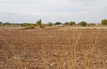 Manual de cultivo paulownia, crear nuevas plantaciones, cómo cultivar paulownia, el establecimiento de las plantaciones de paulownia