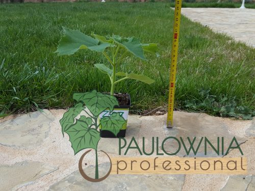 Paulownia Z07 stump 250ml