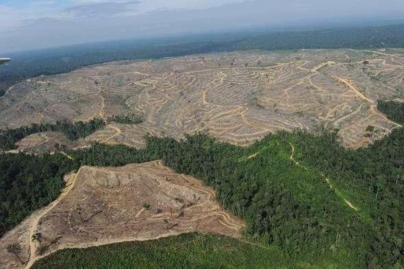 Talla ilegal de madera Rusia