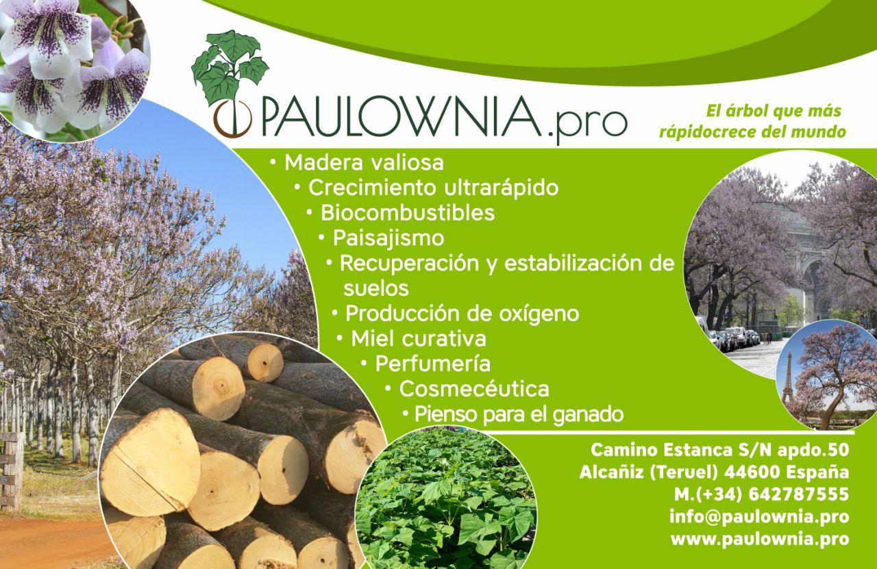 ¿Por qué cultivamos e invertimos en la Paulownia?