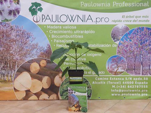 Павловния Tomentosa 5L
